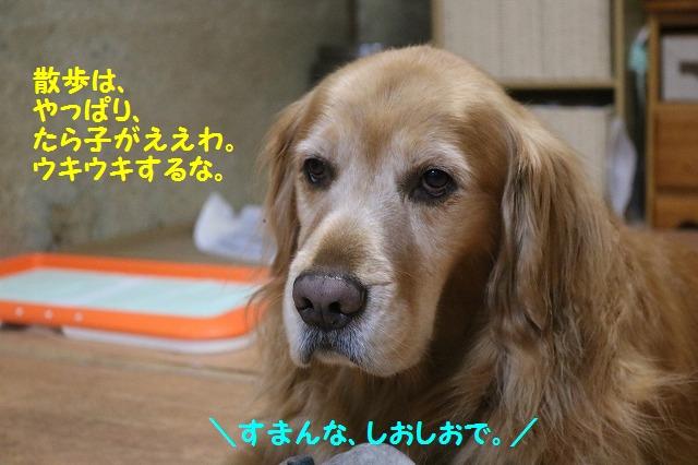 IMG_8931.jpg