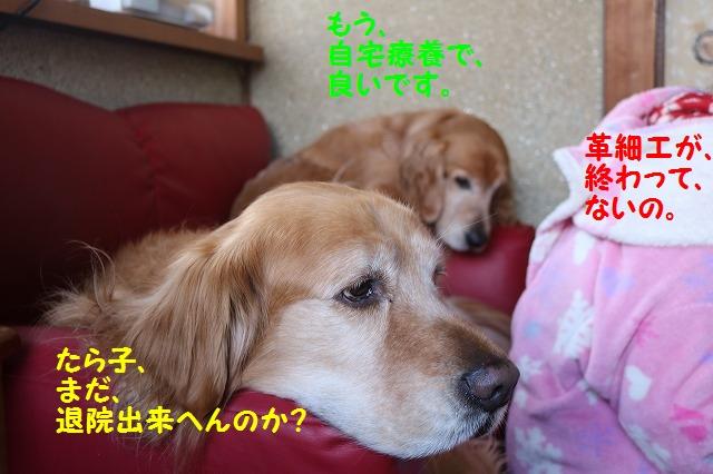 IMG_9691.jpg