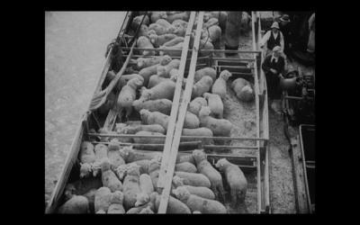 日帝併合時 羊の輸入 記録映画