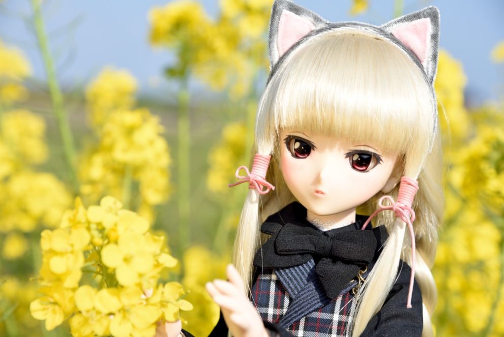 大根の花006