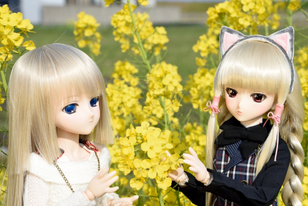 大根の花002