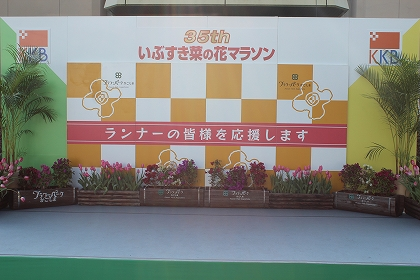 菜の花マラソン2016-6