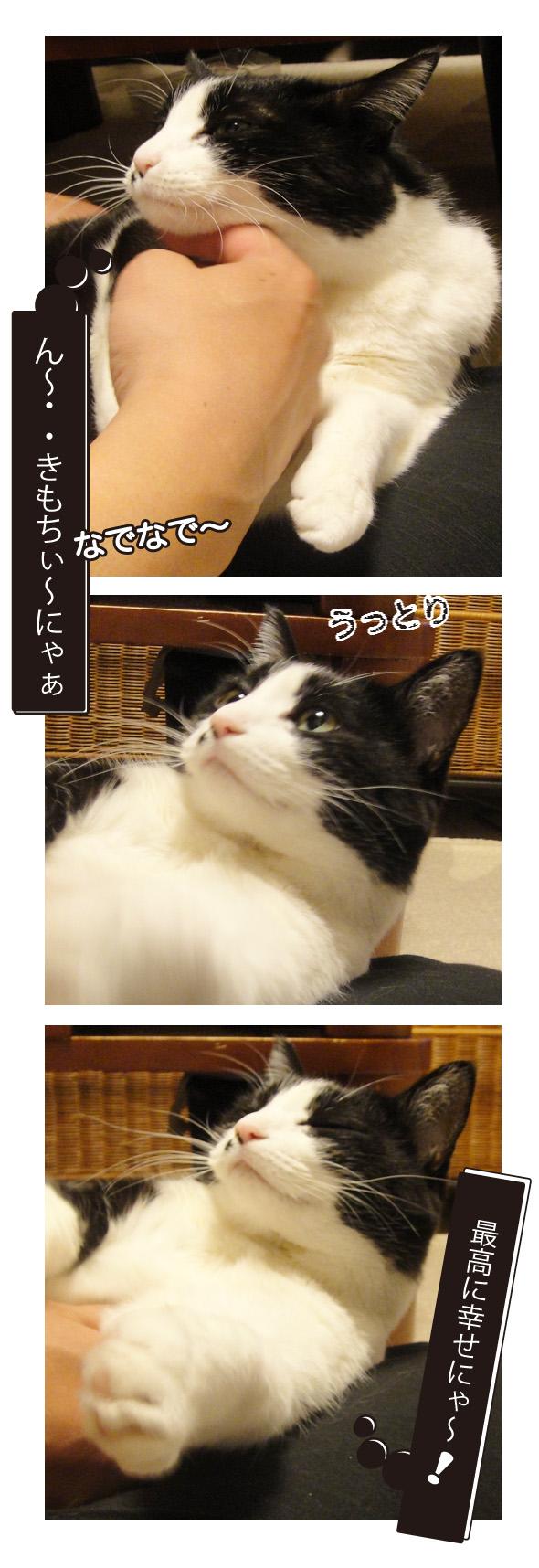なでられ猫