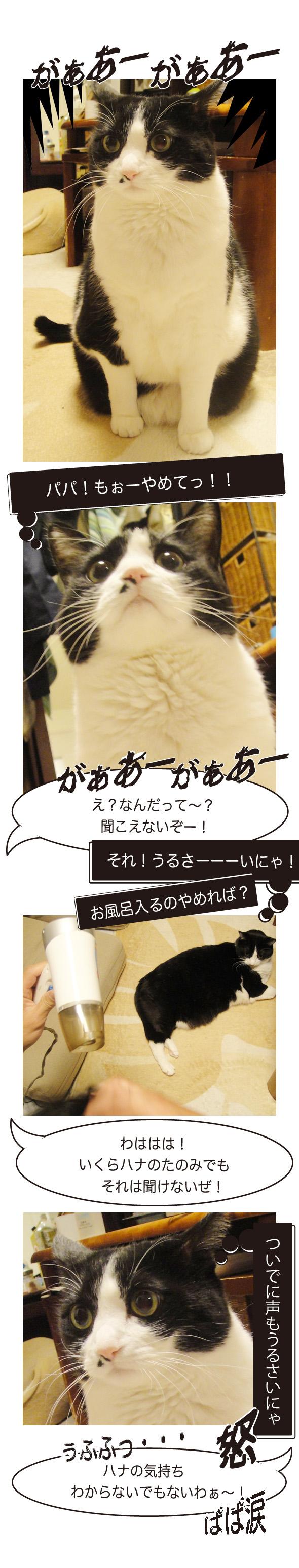 音に敏感な猫ちゃん