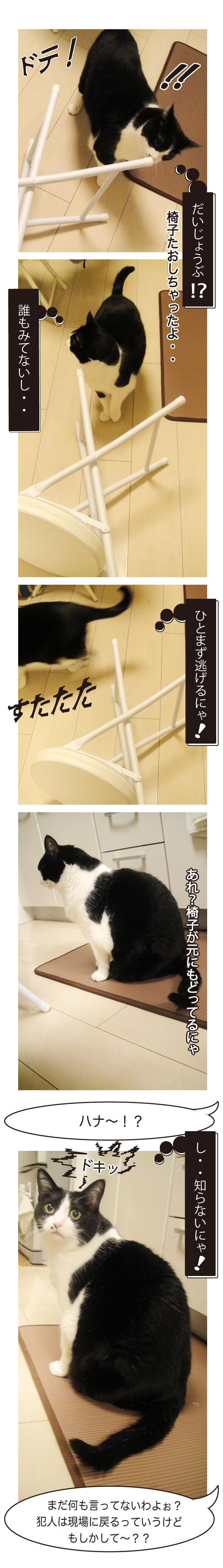 椅子をたおした猫