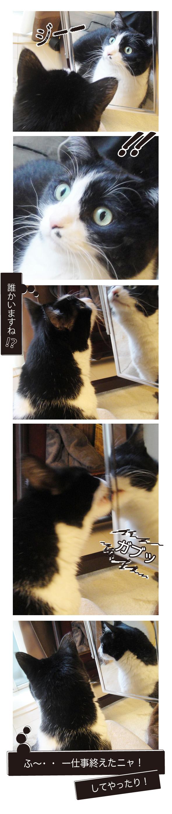 cats20160320.jpg