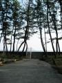 海沿いの松林@高知県