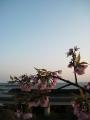 花も日暮れ@高知県