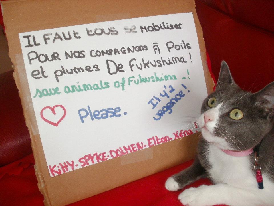 kitty france