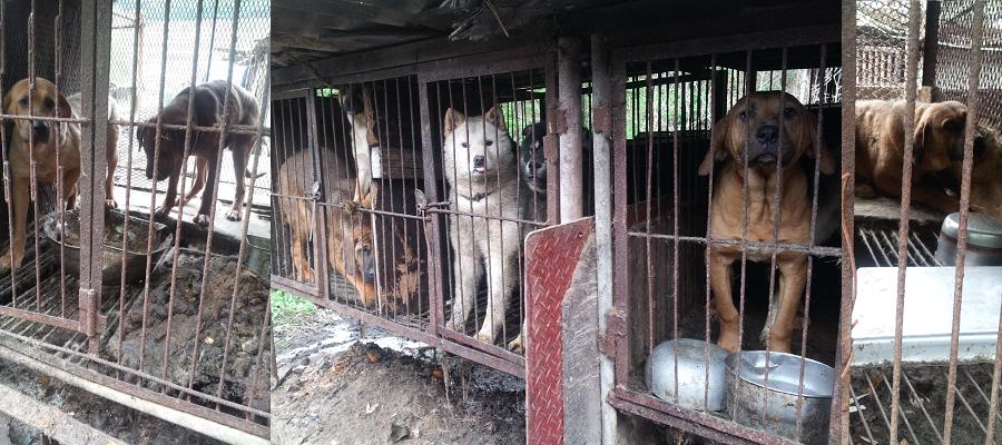Yongdang-dog-farm.png
