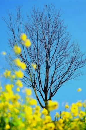 足元から春の兆し