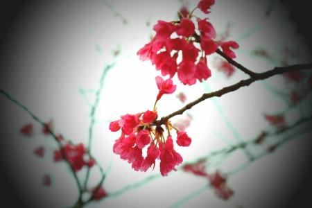 ひと足早い春