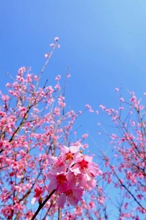 華やぐ季節の訪れ