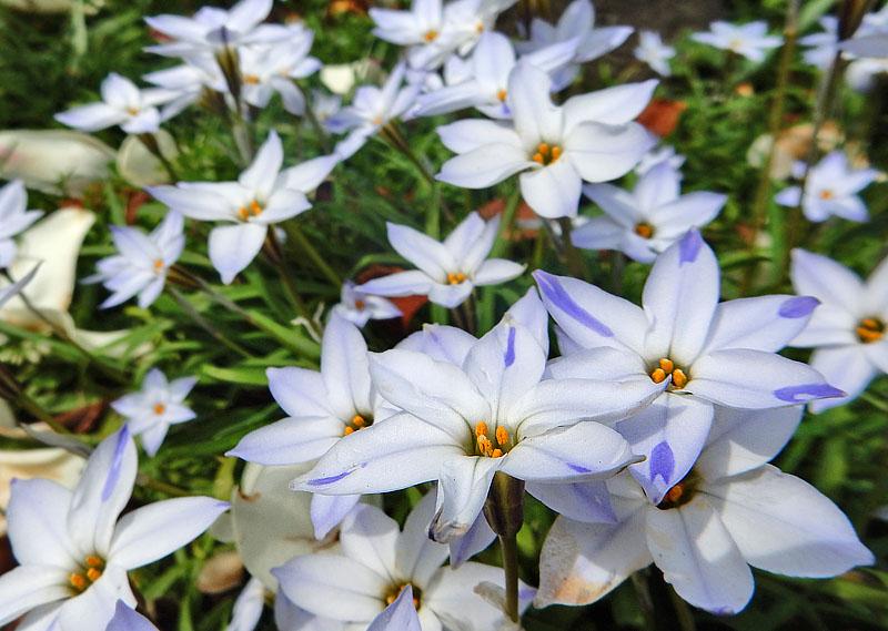 160329春の花たち2