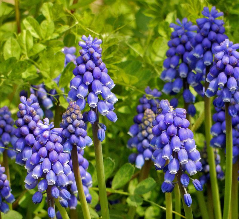 160329春の花たち3