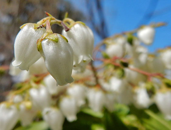 160329春の花たち4