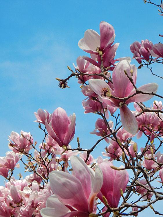 160329春の花たち7