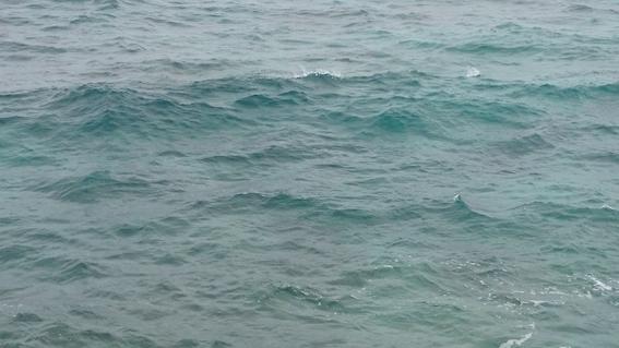 海ガメがそこかしこで首を出す水面