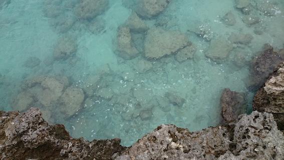 伊敷浜の小魚