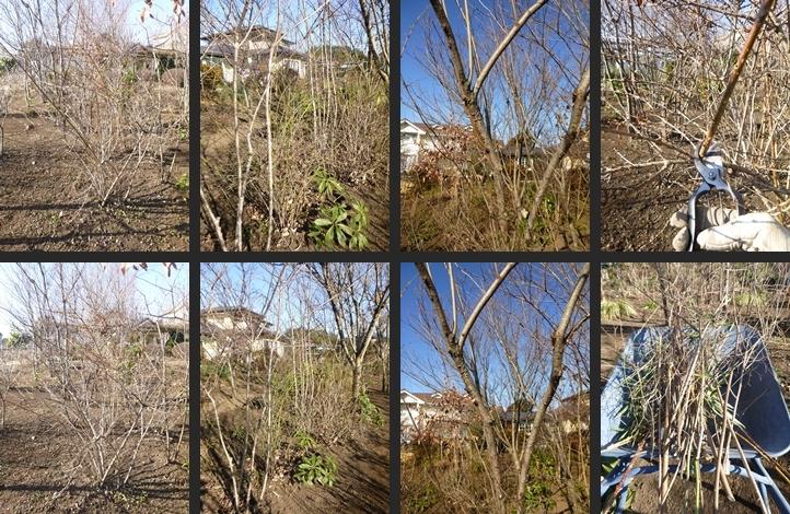 P1890528-horz-vert.jpg