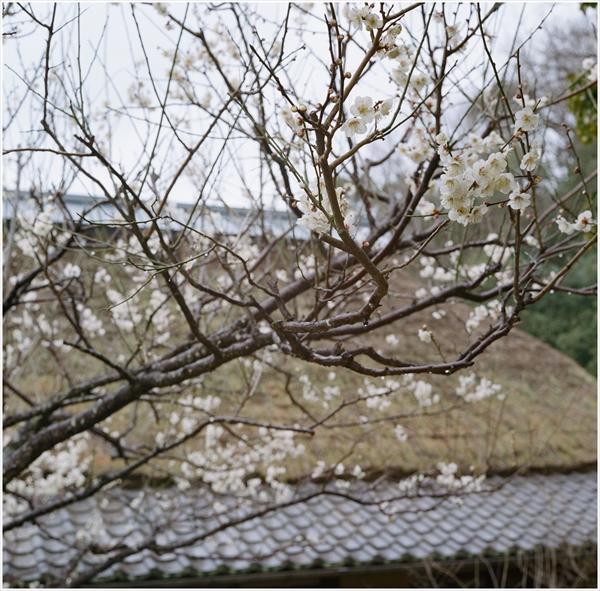 ローライ-2016-3-6 昭和村 portara400-71940011_R