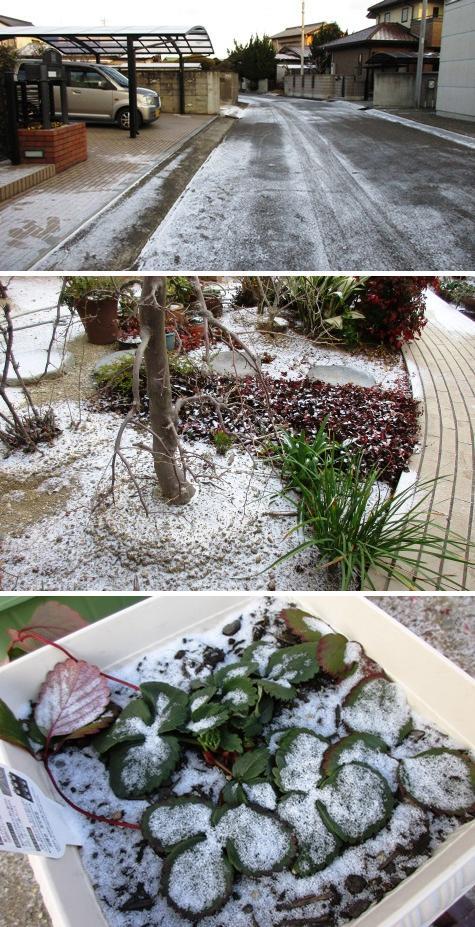 a雪IMG_2252