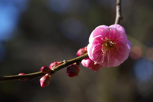 小石川植物園便り003