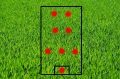 grass-275986_640.jpg
