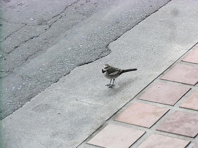 何という鳥だろう