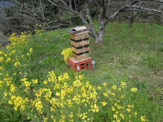 巣箱の設置 H280328