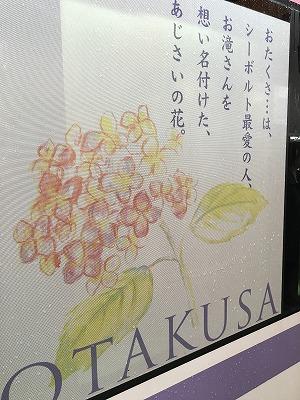 s-オタクサ
