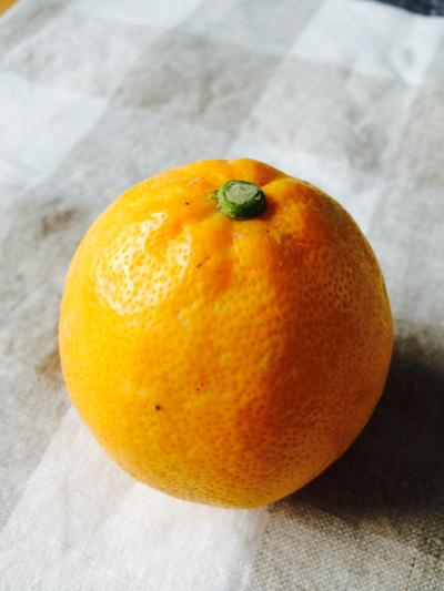 2016.3.1柑橘