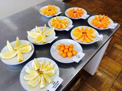 2016.3.3.柑橘類