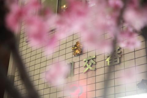 20160320nakasusakura2.jpg
