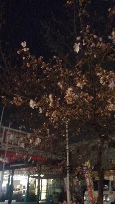 0401桜4