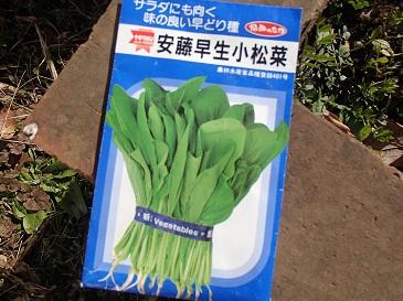 安藤早生 種子袋