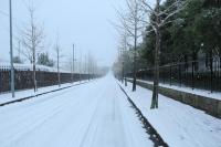 01253雪景色