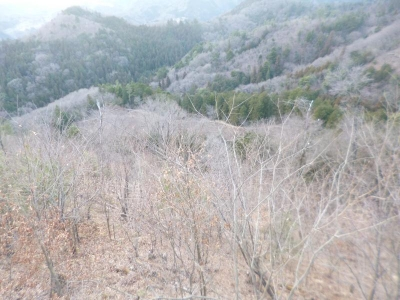 キャバマルとお出かけ(八重山)