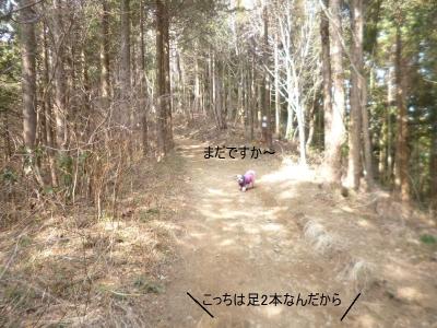 景信山 ワンコと山歩き