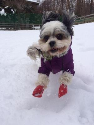 woofで雪遊び(ワンコとお出かけ)