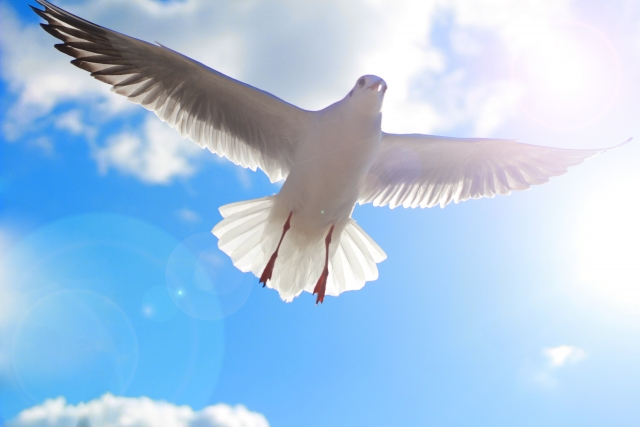鳥と光 34a08f6f3922664e8367a9520b1187df_s