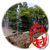 韓国 仁川大公園
