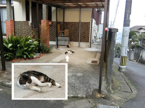 今日3匹目のネコ発見・・・ですが・・・。