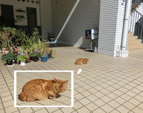 本日も、ネコ発見!