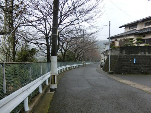 お散歩コースの桜の道。