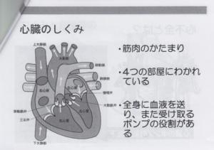 心臓のしくみ(1)