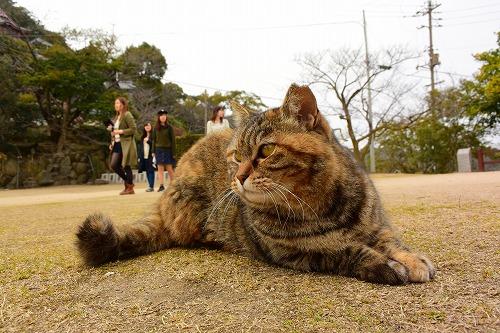 猫@尾道 (43).20160308.1520