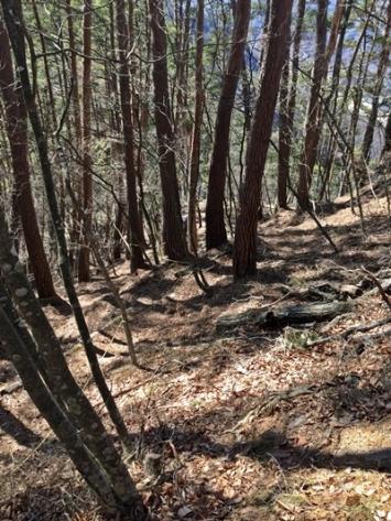 松葉に覆われた急峻な斜面