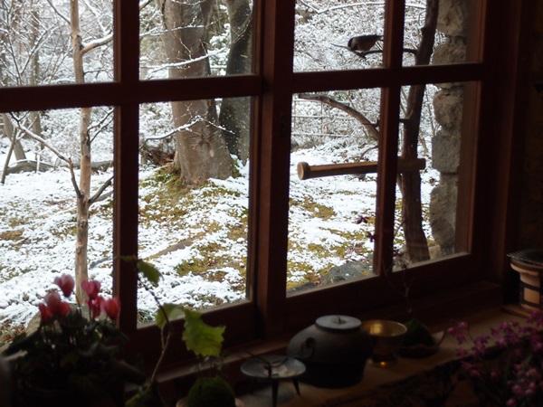 ヤマガラもびっくり、雪か