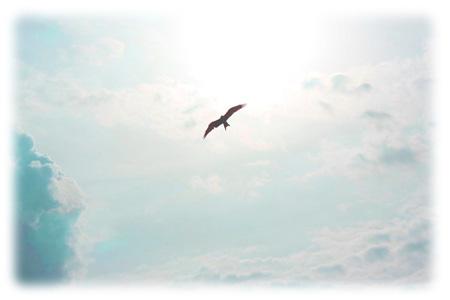 bird2015.jpg